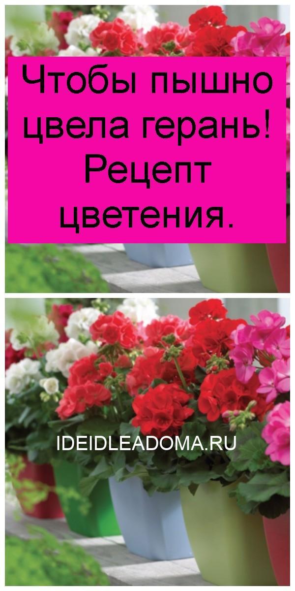 Чтобы пышно цвела герань! Рецепт цветения 4